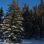 جنگل های ملی به شما امکان می دهند درخت کریسمس خود را ببرید